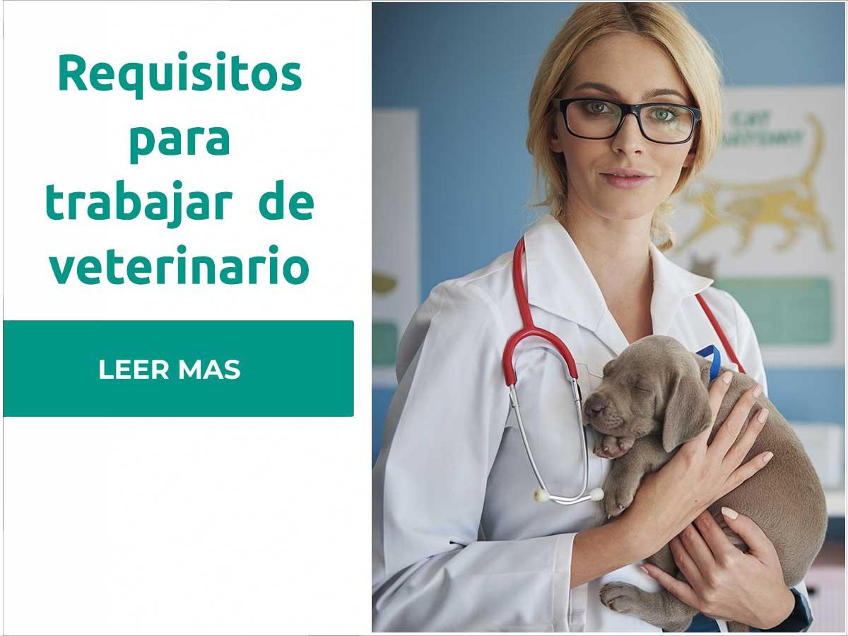 Requisitos para trabajar de veterinario